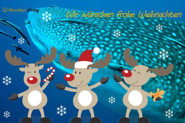 Frohe Weihnachten 2016 - Member Diving