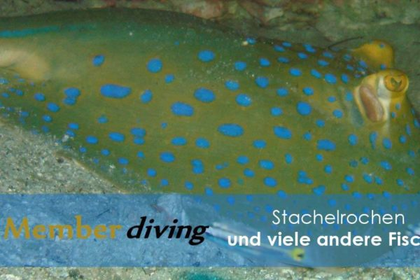 Tauchen und Tauchausflug mit Member Diving