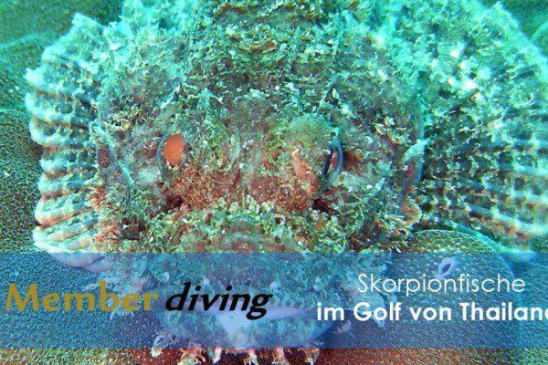 Tauchen mit Member Diving