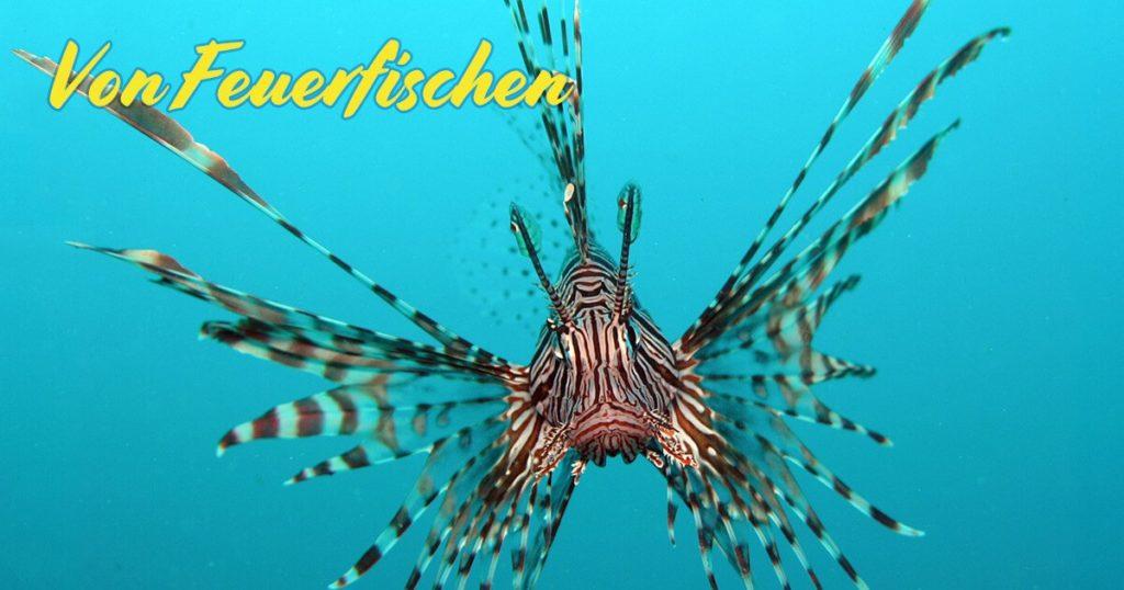 Feuerfische, Rotfeuerfische, Löwenfische