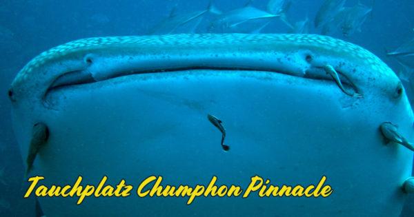 Tauchplatz Chumphon Pinnacle