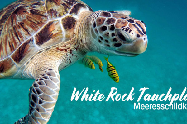 White Rock Tauchplatz - Meeresschildkröte