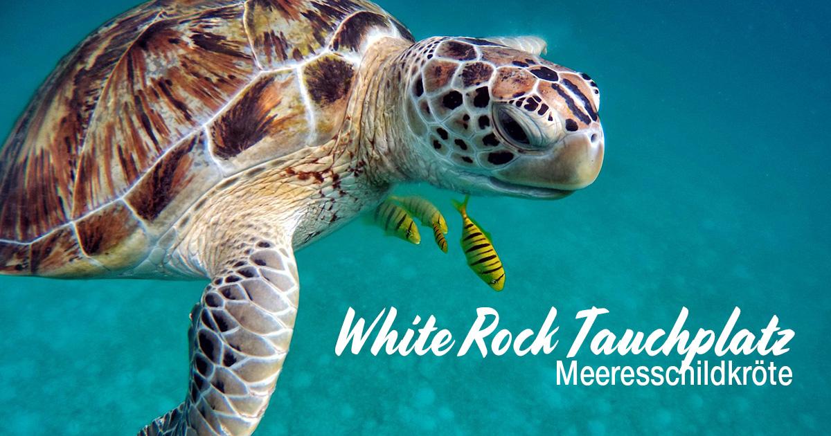 White Rock – Tauchplatz