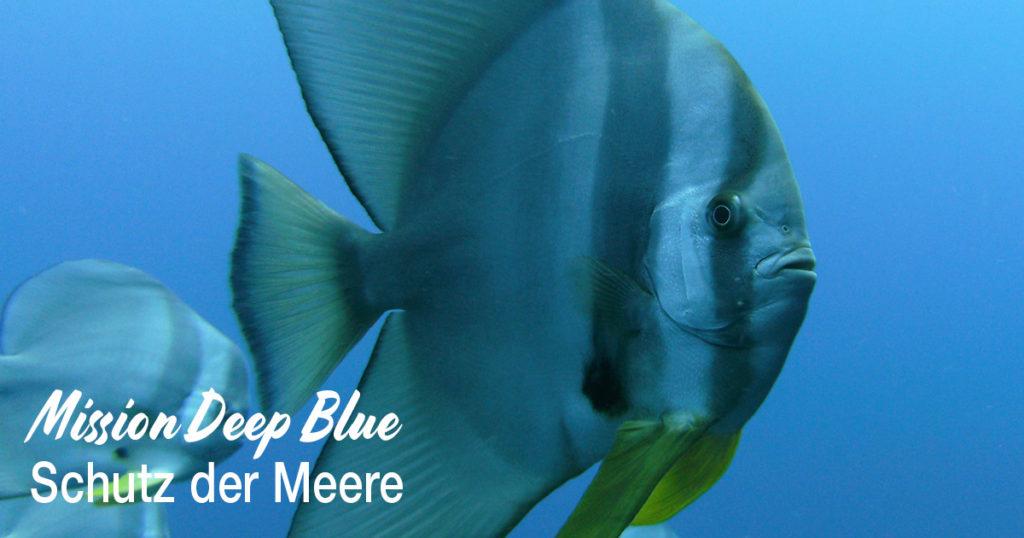 Deep Blue Schutz der Meere