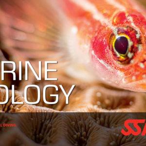 Marine Ecology / Underwater Naturalist